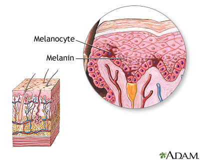 Melatonin deficiency   bellingham naturopath